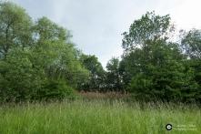 Garnisonsschuetzenhaus-Dornhaldenfriedhof-Offenland-Biotop-Feuchtgebiet-Ostseite_3Juni14_CClausen
