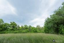 Garnisonsschuetzenhaus-Dornhaldenfriedhof-Offenland-Biotop-Feuchtgebiet-Westseite_3Juni14_CClausen