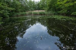Garnisonsschuetzenhaus-Teich-am-Dornhaldenfriedhof-FND-LSG_28Mai14_CClausen-3