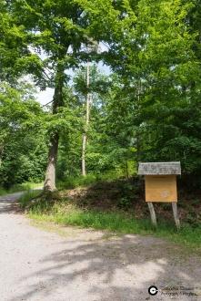 Garnisonsschuetzenhaus-Wald-West-slope-Geolehrpfad_28Mai2014_CClausen-3