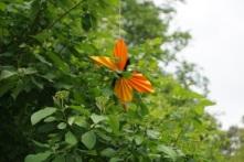 Wegmarkierung Schmetterling von der Seilbahn zur Ausstellung